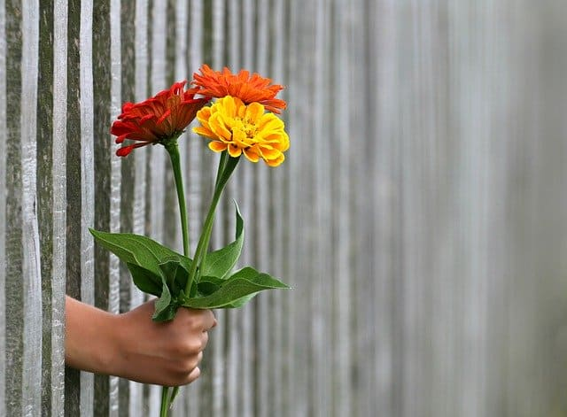 Steal Your Joy - image: hand with flowers